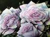 roses2010