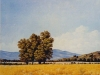 fields_arboles1