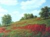fields_tierra_roja