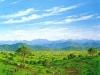 fields_valle_verde