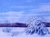 snow_matorral