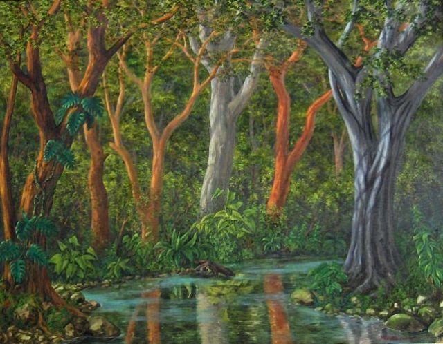 rivers_selva