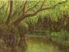 trees_barranca