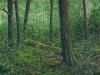 trees_bosque2