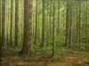 trees_bosque_de_pinos1x8-03