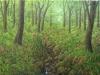 trees_bosque_de_tetela2