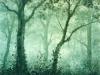 trees_bruma