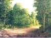 trees_camino7x51980