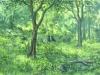 trees_campina