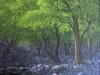 trees_lecho_de_rio