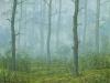 trees_neblina