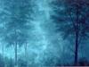 trees_ottawa