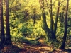 trees_parque_stanley