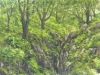 trees_santa_maria