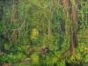 trees_selva