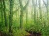 trees_selva1x8-03