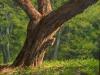 trees_tronco