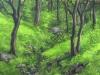 trees_zempoala